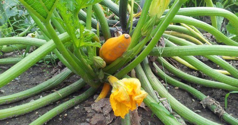 Zucchini-Lauchsuppe mit Petersilie